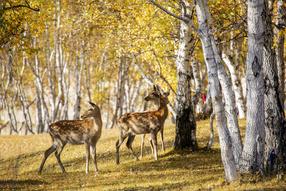 树木山坡和梅花鹿的照片
