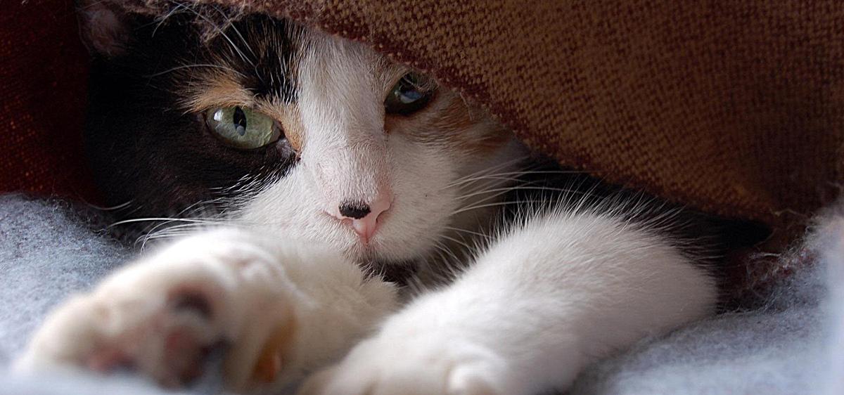 图片 > 【jpg】 小猫 动物 背景  分类:自然/风景 类目:其他 格式:jpg