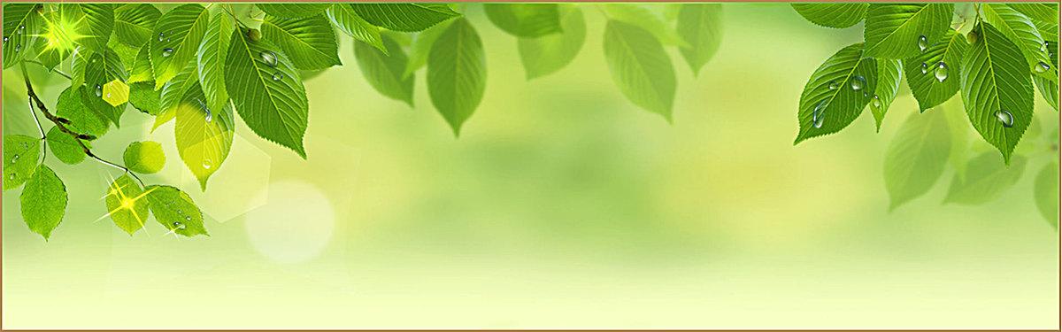 清新树叶背景图片背景素材免费下载,图片编号5405_千5