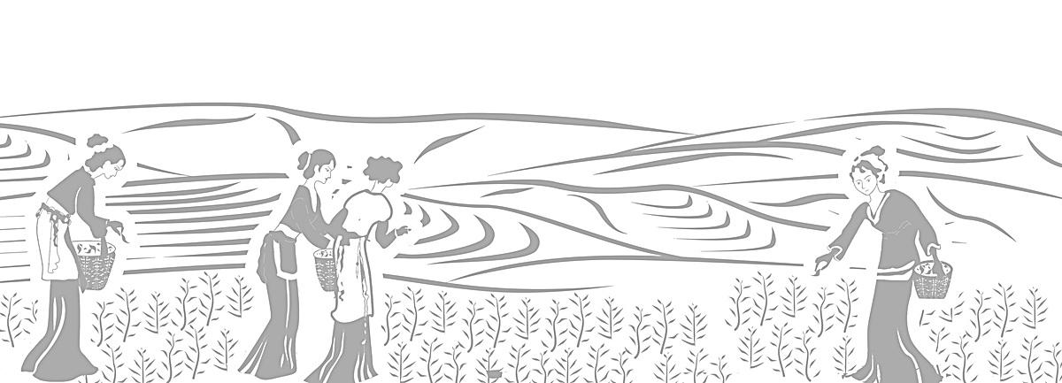 葫芦丝采茶午曲谱