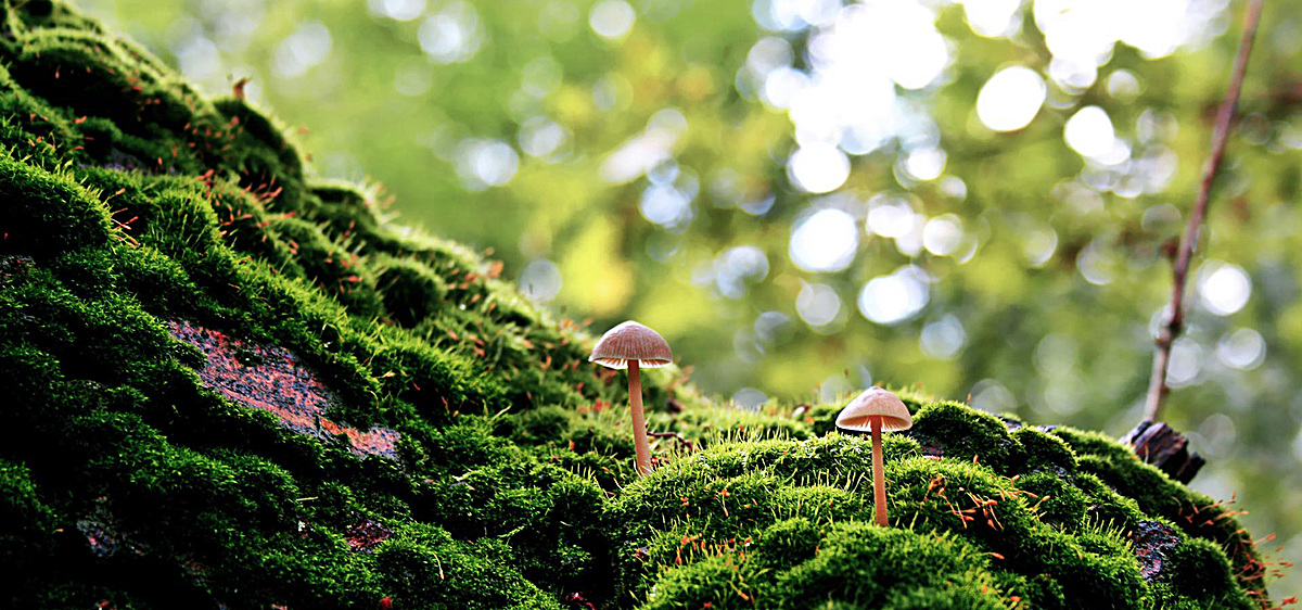 圖片 > 【jpg】 微距攝影背景  分類:自然/風景 類目:其他 格式:jpg