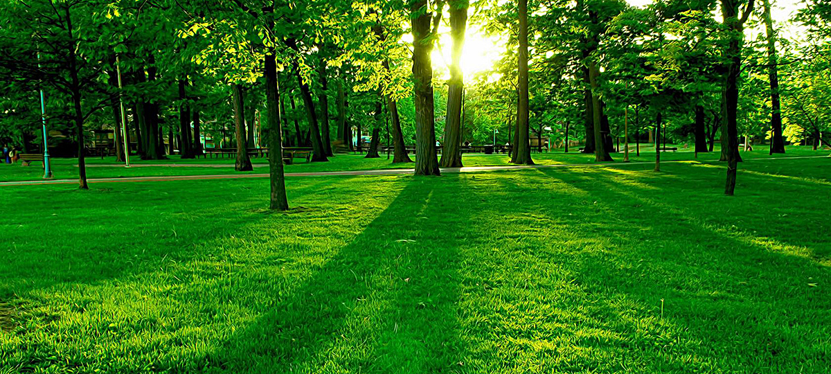 阳光绿树森林唯美工艺公园主题背景图