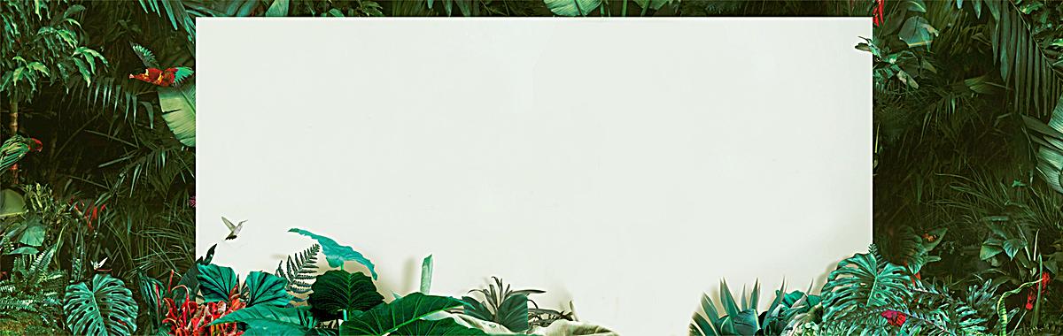 森林边框图片大全