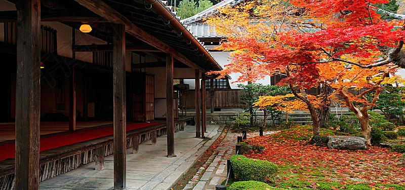 秋天的庭院背景图片免费下载 海报banner 高清大图 千库网 图片编号2654425