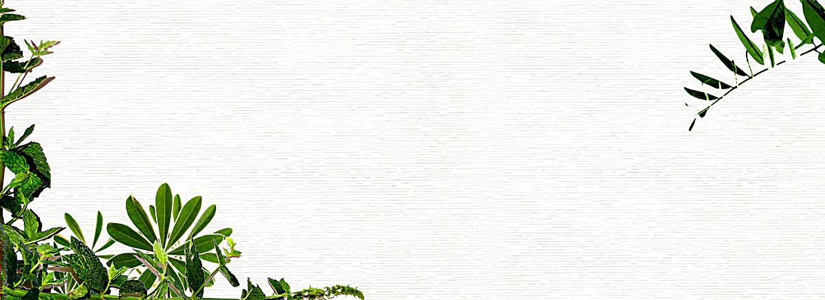 小清新文艺绿叶背景