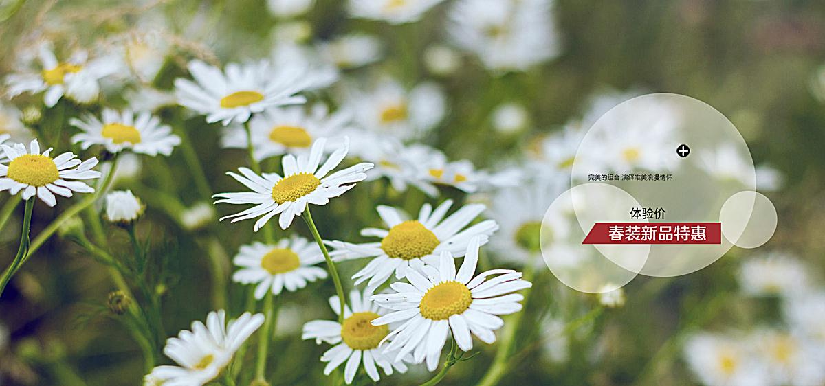 图片 > 【psd】 小雏菊背景图  分类:自然/风景 类目:其他 格式:psd