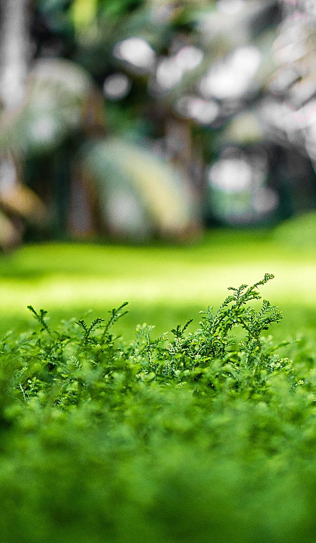 背景 壁纸 绿色 绿叶 树叶 植物 桌面 650_1117 竖版 竖屏 手机