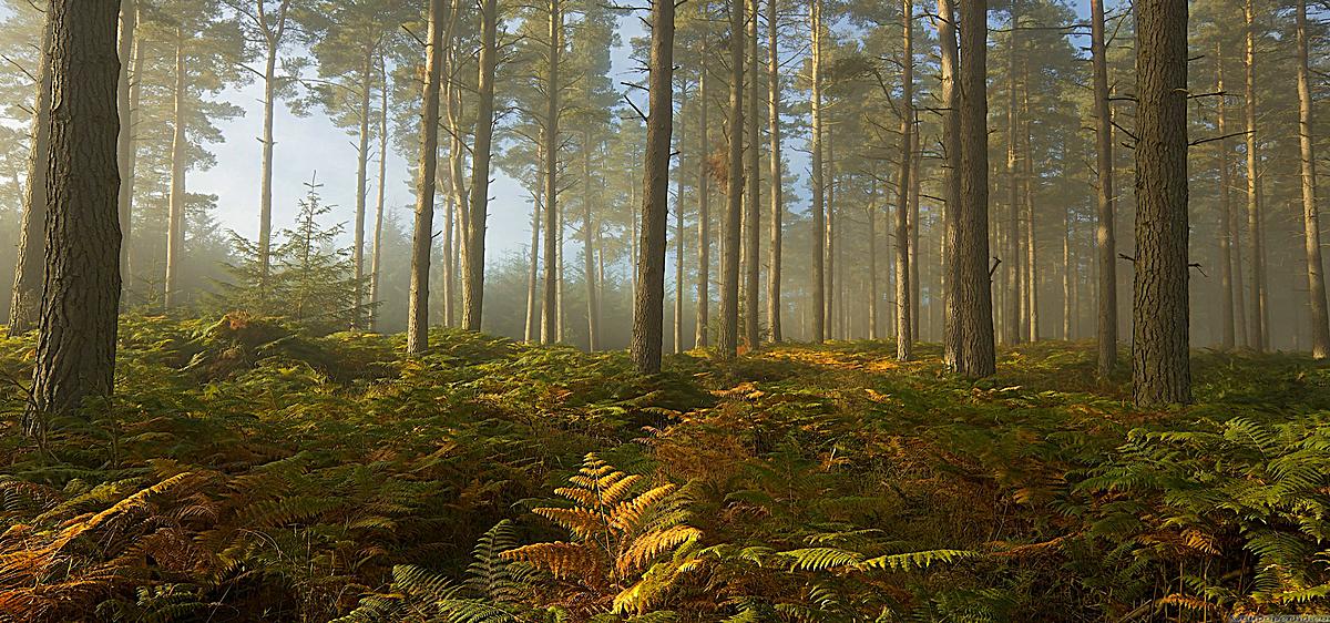 热带雨林 森林jpg素材-90设计