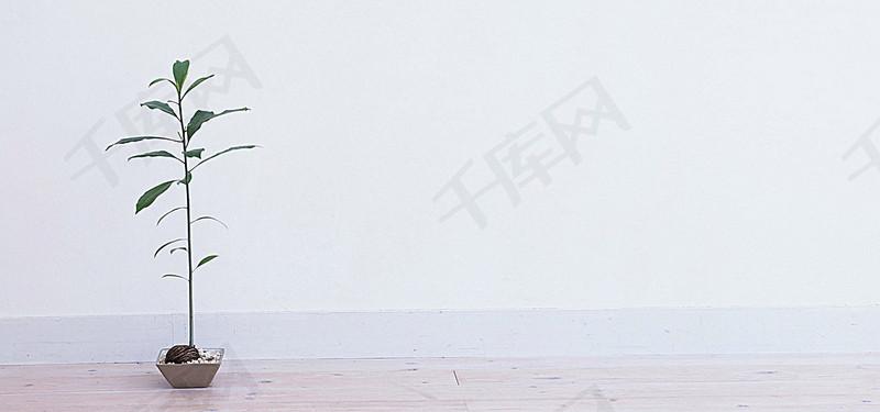 日系清新文藝陽光家居女裝地板墻壁綠植盆栽淘寶背景圖片免費下載 海報banner 高清大圖 千庫網 圖片編號3595507