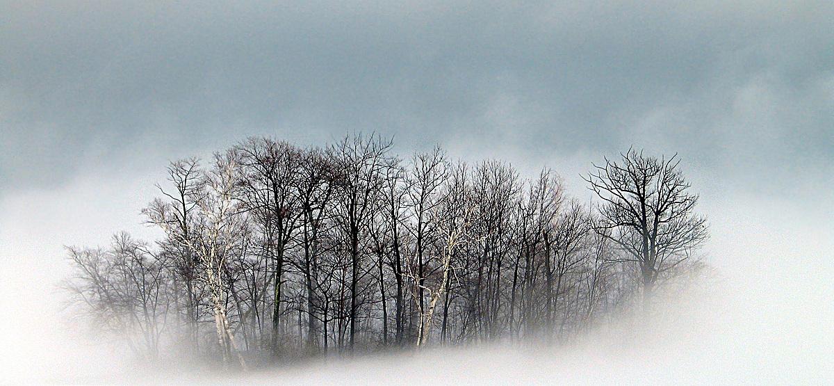 烟雾森林背景图