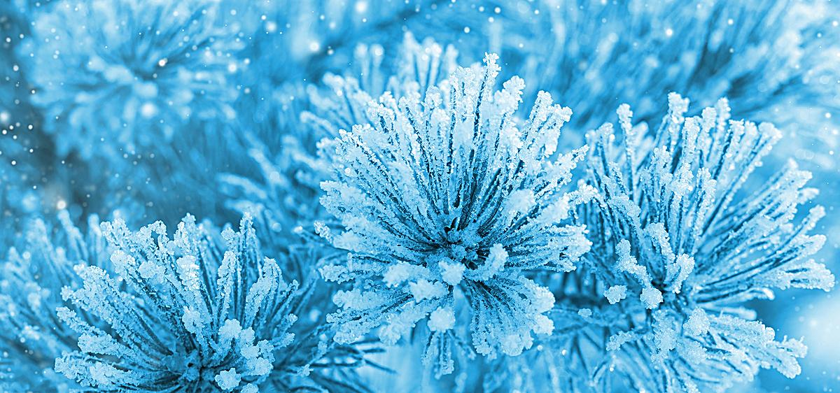 蓝色雪花植物banner