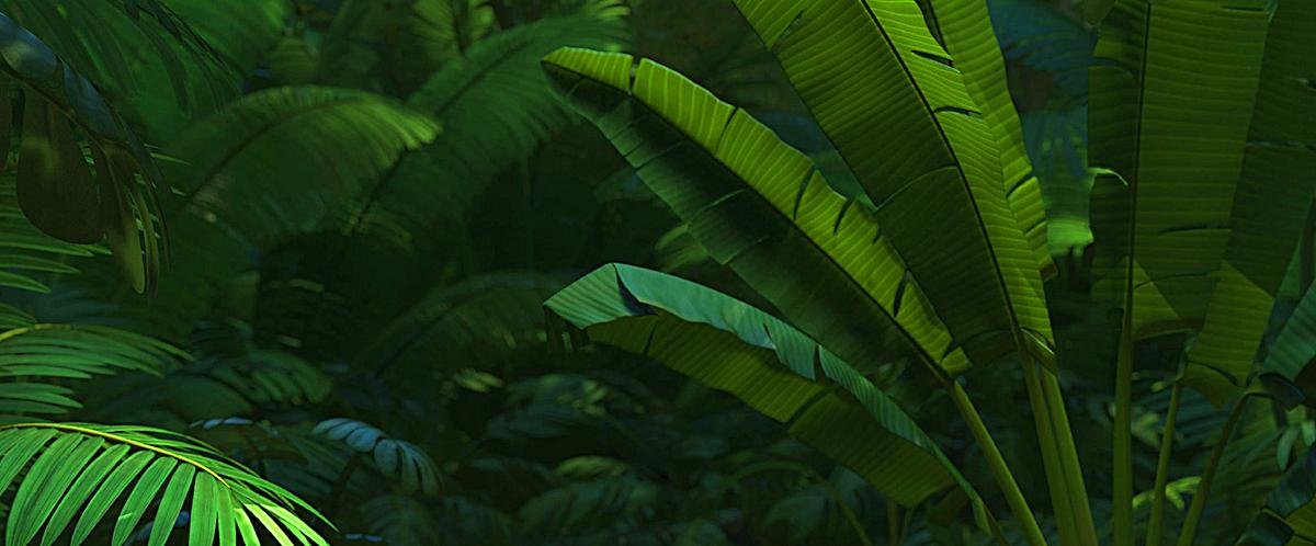热带树林叶子背景图