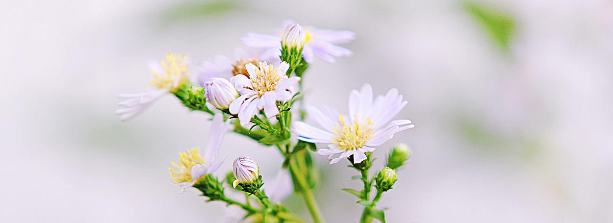 图片 海报背景 > 【jpg】 清新花朵背景  分类:自然/风景 类目:其他