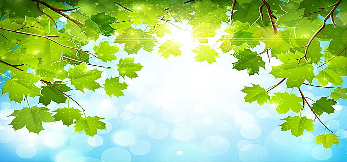 小清新绿叶背景