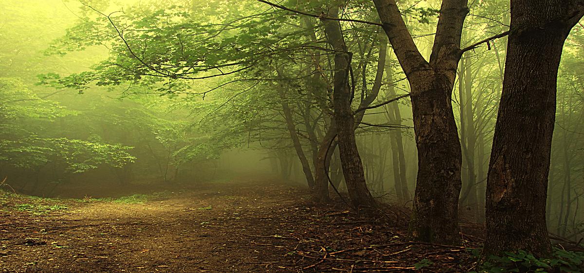 树林道路迷雾风景