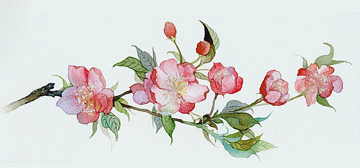 手绘水彩花枝背景