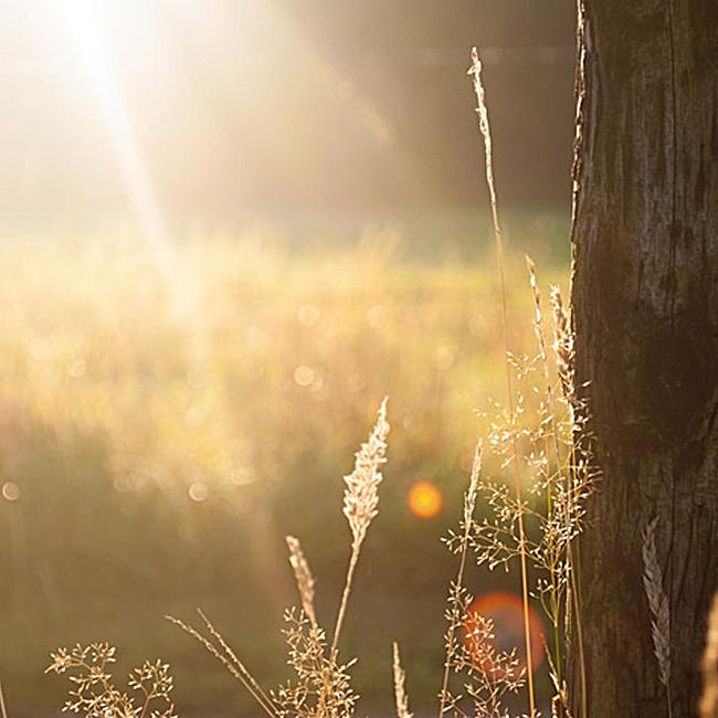 文艺阳光树木背景图
