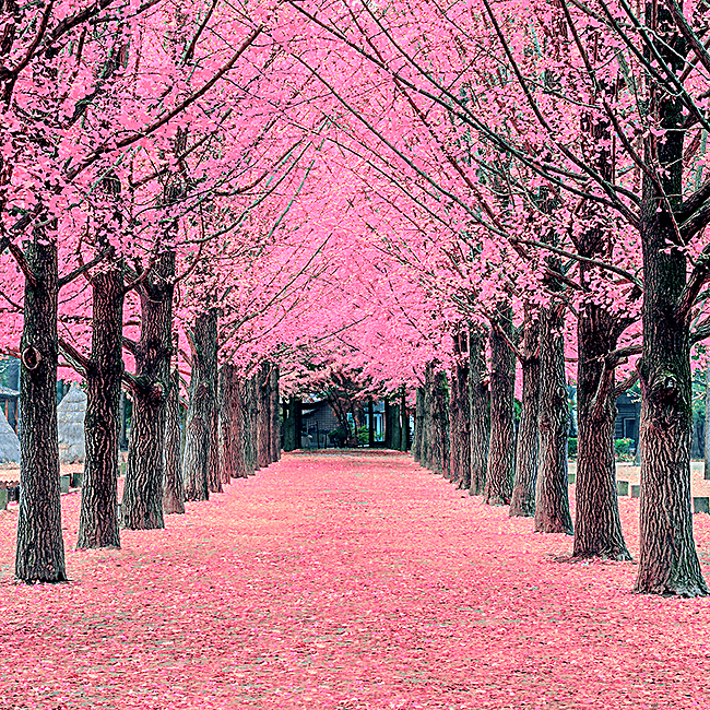 粉色浪漫树林小道背景