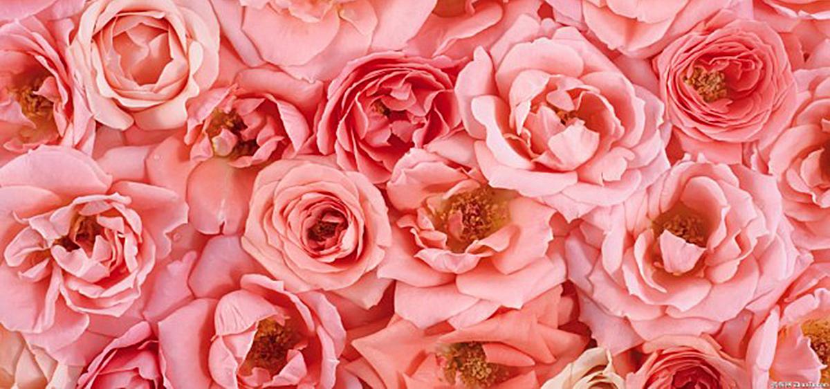 高清浪漫花朵背景