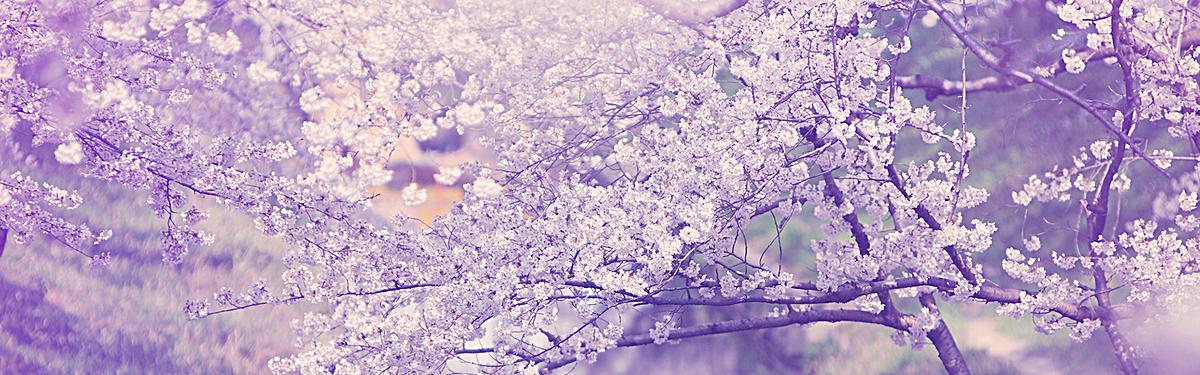 图片 > 【jpg】 唯美樱花紫色背景  分类:自然/风景 类目:其他 格式