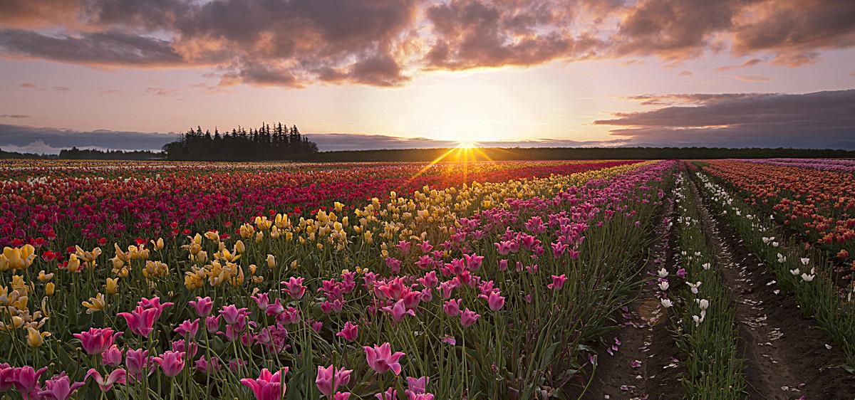 唯美花草风景背景