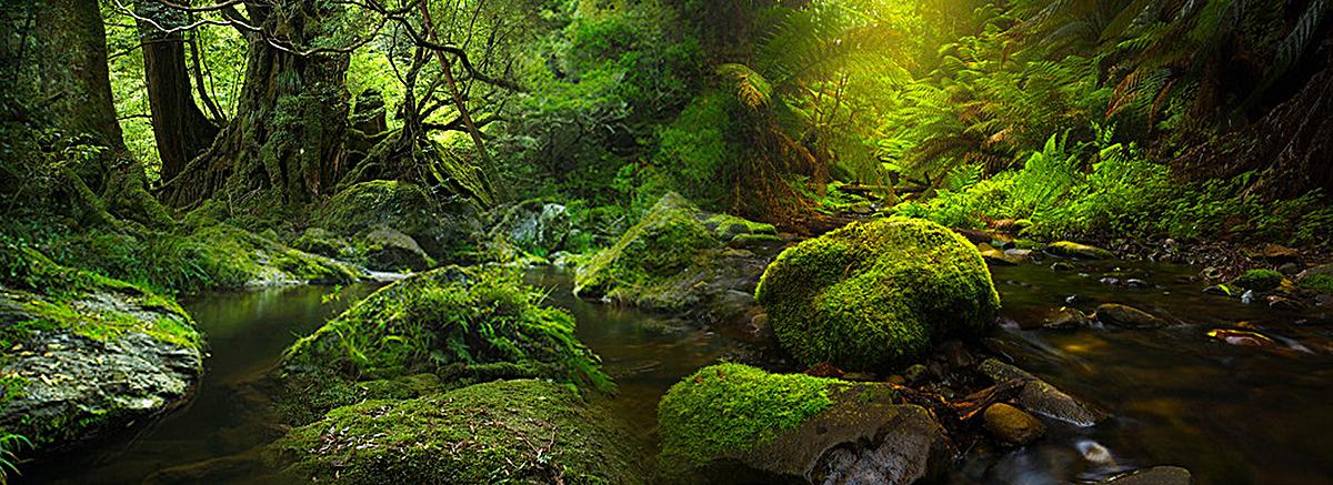 万物生长森林背景图