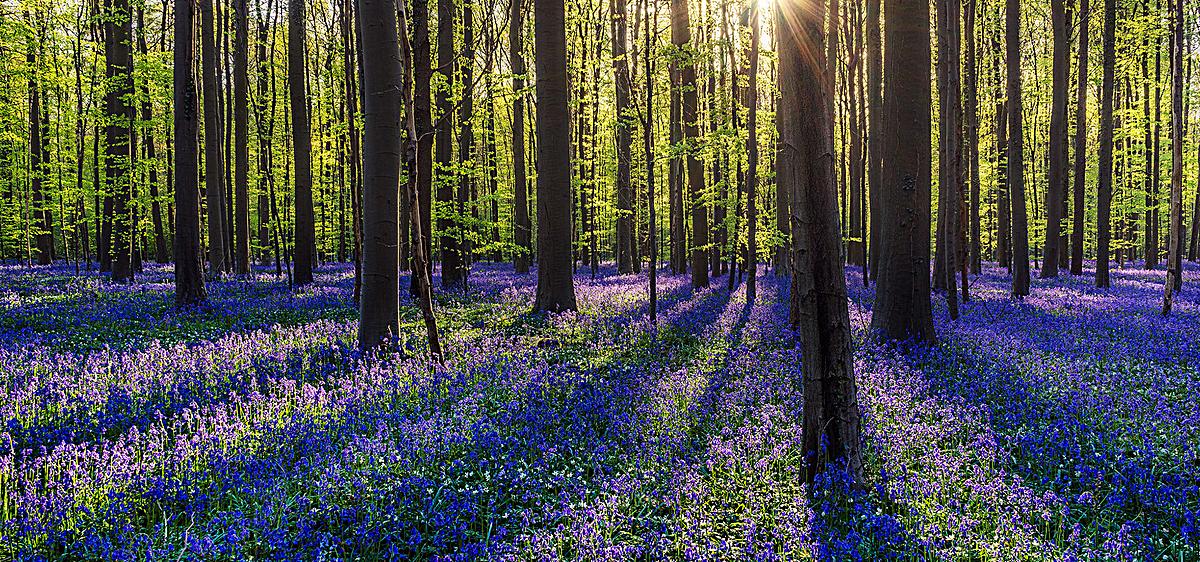 阳光森林背景图