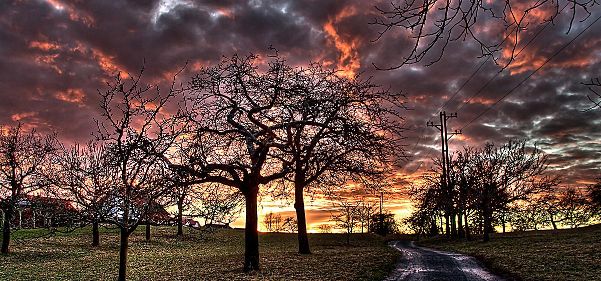唯美浪漫树林风景背景