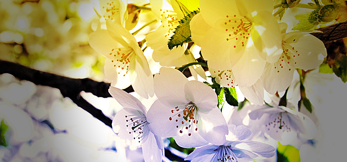 高清唯美浪漫花朵背景