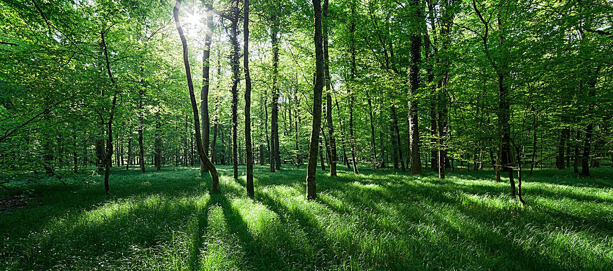 清新文艺森林系背景