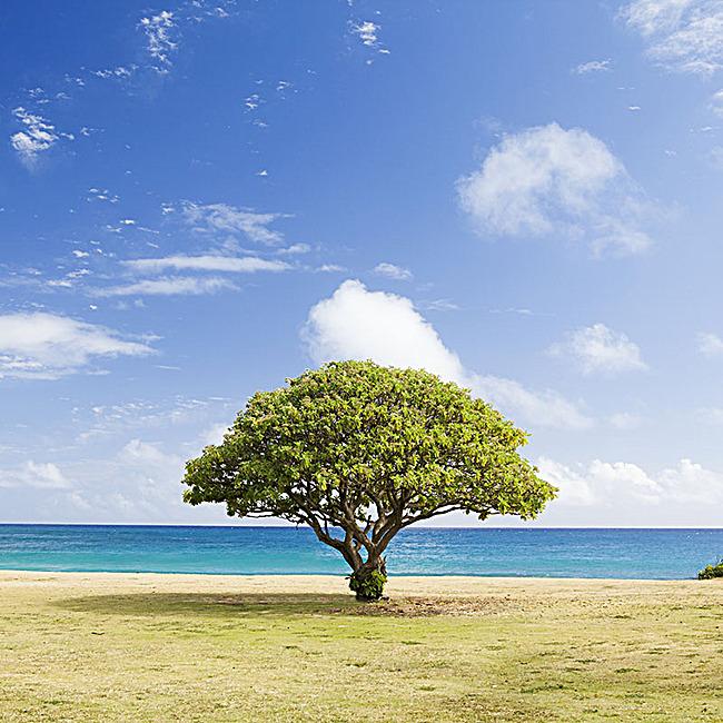 蓝天白云绿树背景