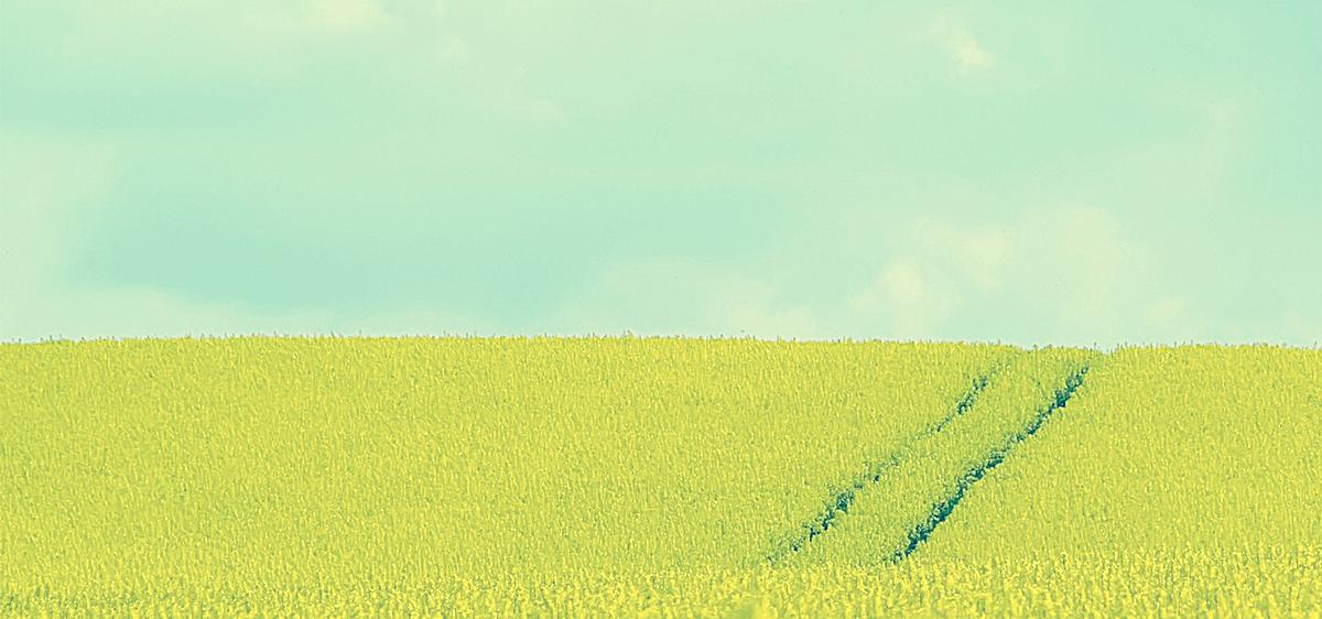 青青草原背景图