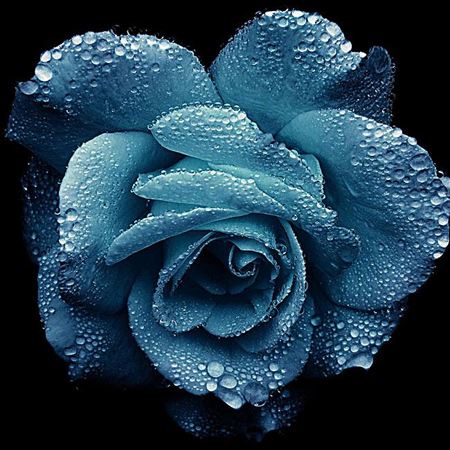 图片 > 【jpg】 黑底玫瑰补水背景  分类:自然/风景 类目:其他 格式