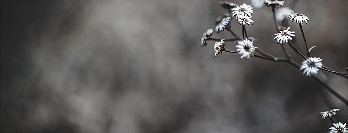 黑白花卉文艺简约背景