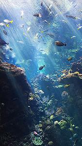 海底世界H5背景