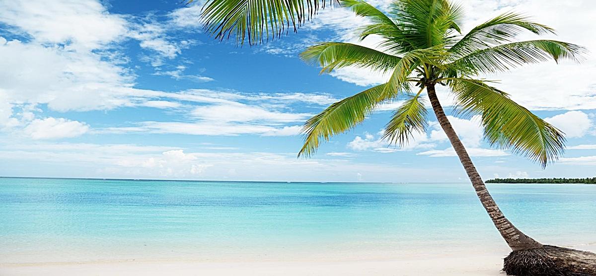图片 > 【jpg】 海边椰树大自然背景  分类:自然/风景 类目:其他 格式