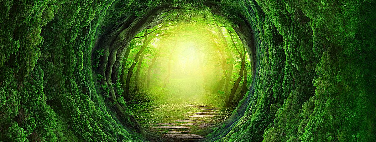 图片 > 【psd】 梦幻森林banner背景  分类:艺术字体 类目:其他 格式