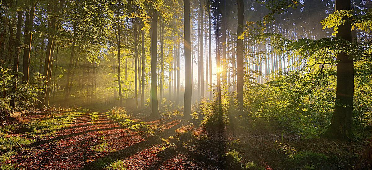 风景绿树光线背景