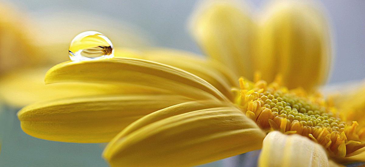 风景蓝天黄色花背景