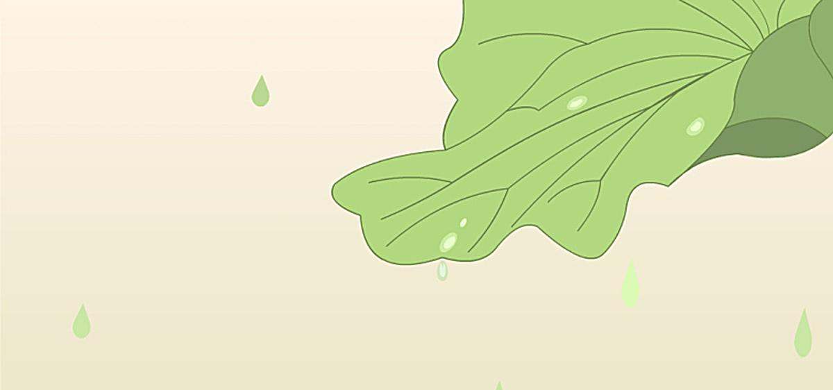 荷叶上的水滴图片