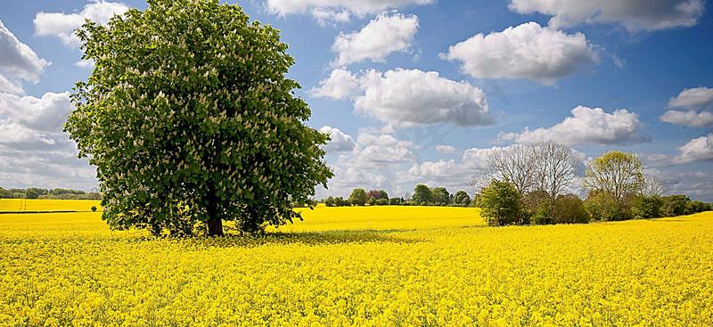 风景蓝天白云绿树背景