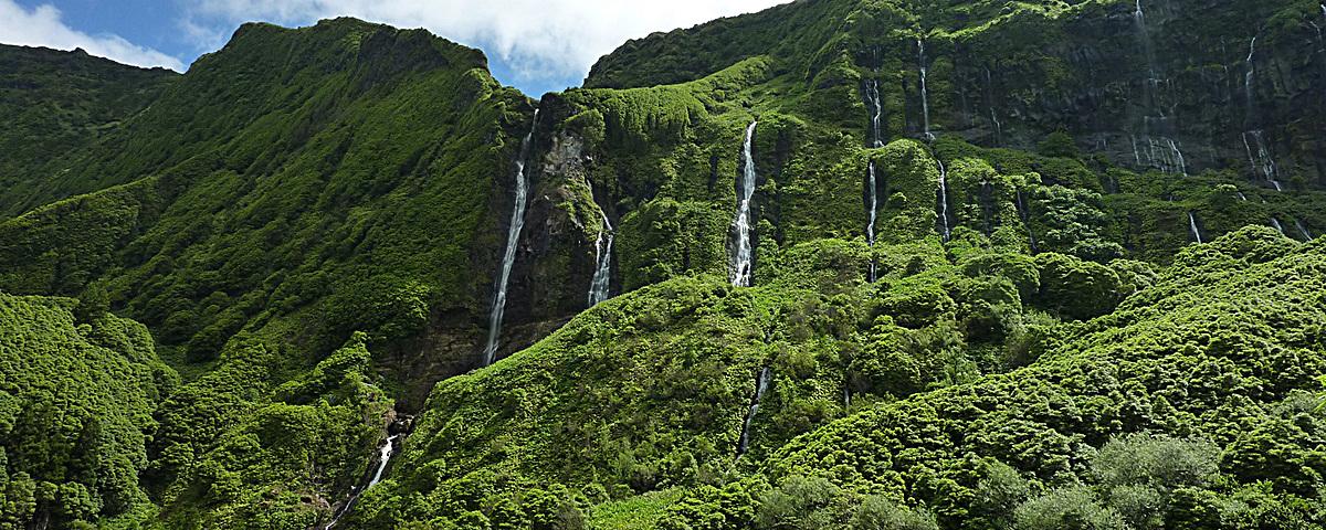 绿色森林瀑布背景