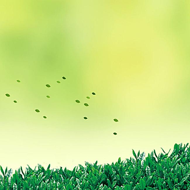 小清新绿色茶叶背景图片
