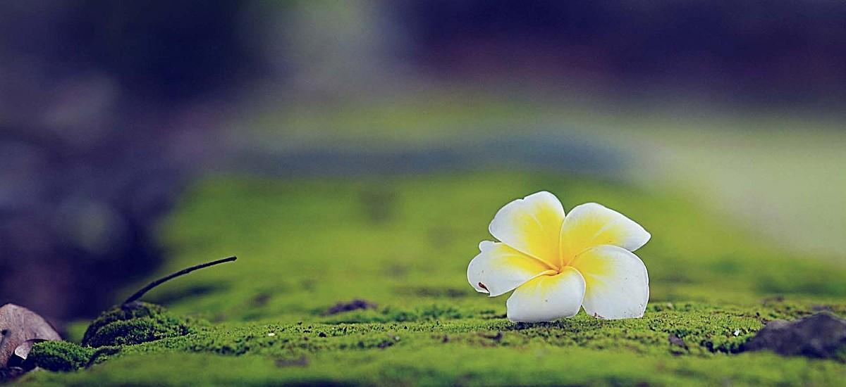 风景绿草白花地面背景