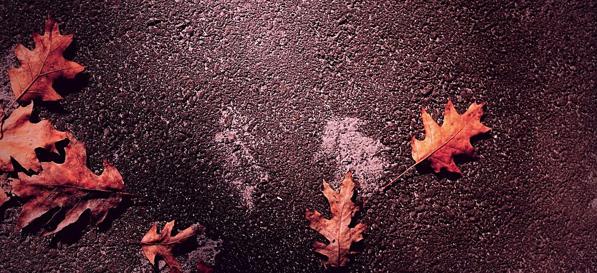 风景黑底红色树叶背景