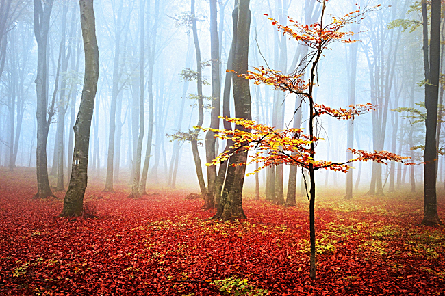 唯美意境森林背景素材
