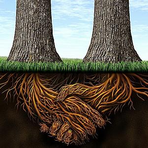 树根背景素材 树根高清背景下载 千库网