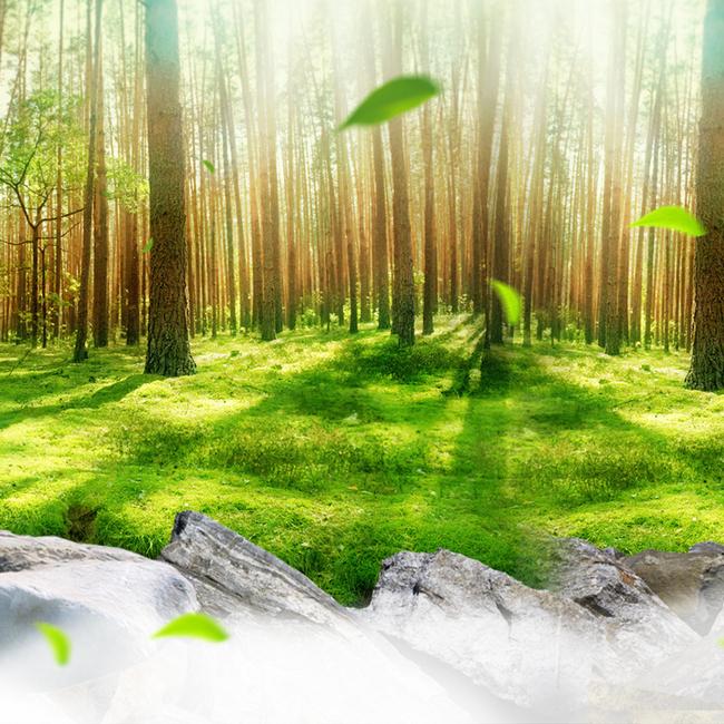 绿色森林大自然主图背景