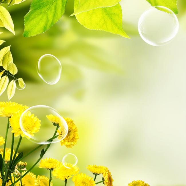 绿色清新叶子花卉泡泡飞舞黄色油菜花