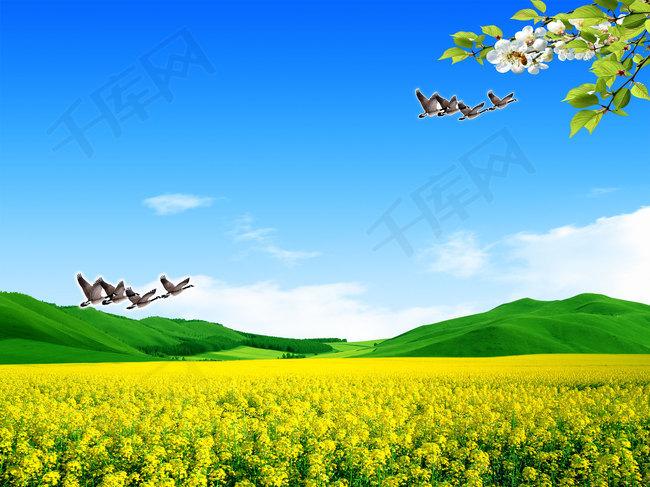 绿色春天背景图片
